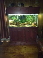 90 Gallon fish tank and cabinet for sale