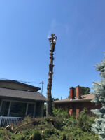 Storm Cleanup and Tree Removal
