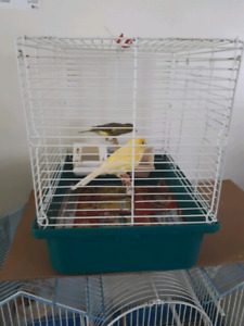 10 month old canary pair with cage