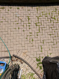 Paver stones for yard or driveway - FREE