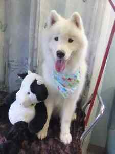 Pet Boarding and Daycare: Paws Claws N' Tails Moose Jaw Regina Area image 3
