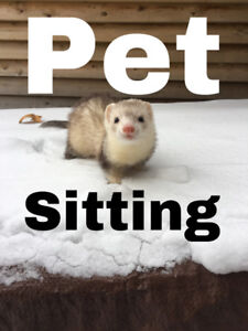 Pet sitting in St Catharines