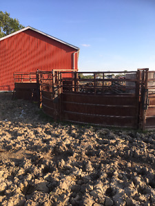 cattle shoot, corral and squeeze
