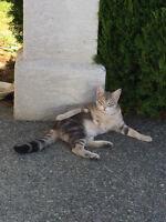 Kitten Lost In Langford