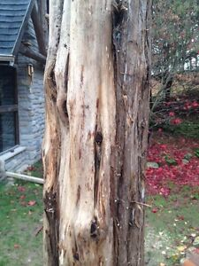 WANTED: Juniper or Cedar logs Cambridge Kitchener Area image 1