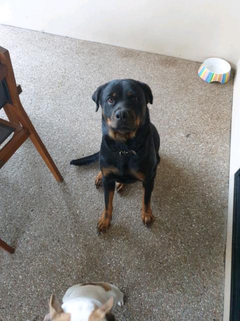 Free to good home | Dogs & Puppies | Gumtree Australia Mackay City