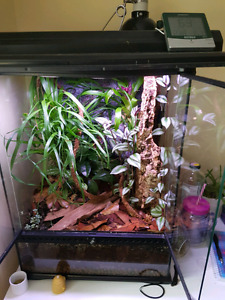 Planted Vivarium With a Custom Background