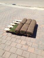 Free turf / sod in Stonebridge (6 rolls)