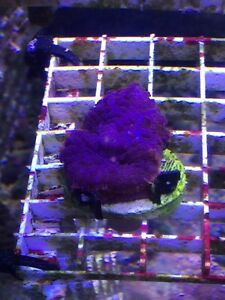 Coral frags forsale