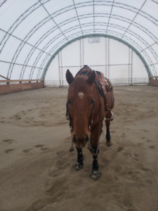 Horse Boarding - Keremeos, BC