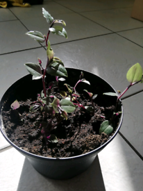 Houseplant- easy grow - white flowers