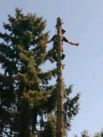 TREE REMOVAL ***FREE QUOTES***