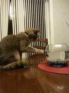 Pension pour chat - résidence privée