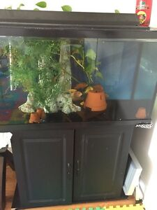 3 square feet Hagen fish tank $100