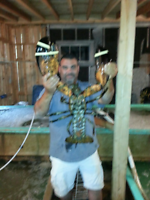 Live lobster and scallops