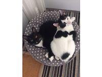 Cat Sitting/Feeding Service!