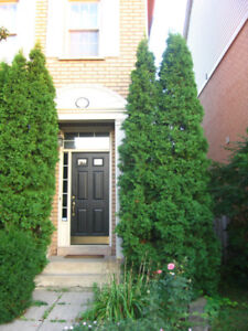 High Ceiling Townhome for lease in uptown Oakville
