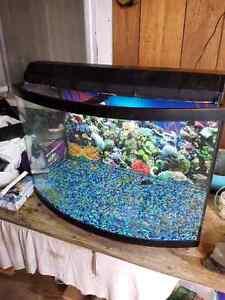 36 gallon bow front aquarium