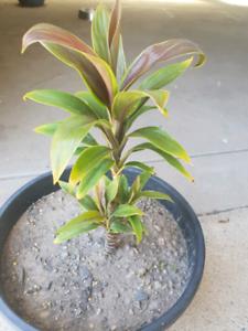 Plants going cheap