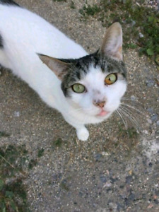 VINNIE IS MISSING FROM PETSAVE LIVELY