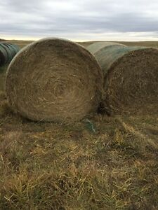 Hay for sale delivered/Green feed. Delivered Price