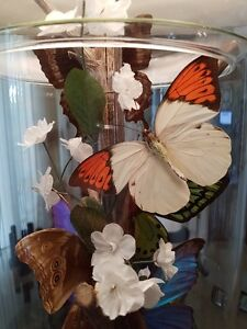 REAL BUTTERFLY TRI-LIGHT LAMP WITH NIGHT LIGHT/Price Drop Cambridge Kitchener Area image 8
