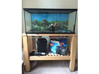 Large fish / terrapin tank with extras