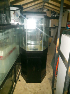Octagon fish tank and stand and lid and light for sale