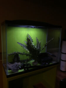 Aquarium 35 gallons. Tout équipé & meuble
