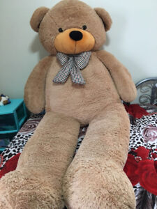 TEDDY FOR SALE