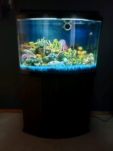 Fish tank for sale. 55 gallon. Comes with 3 koi and 1 ghost koi