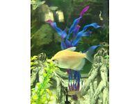 9 tetra fish