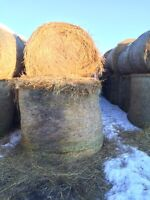 Greenfeed for sale
