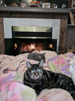 Missing tabby from Parkridge 3062028295