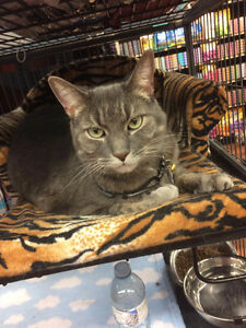 available for adoption at Pet Valu - Mohawk Road