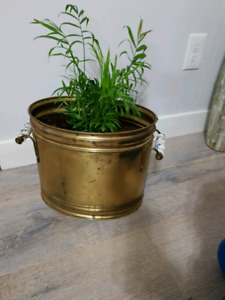 Bamboo plant in brass pot