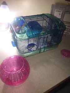 Syrian Hamster with all Nessesities Kitchener / Waterloo Kitchener Area image 5