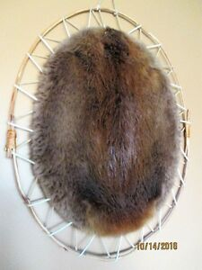 Beaver Pelt Professionally tanned & displayed + FurHarvester Bag