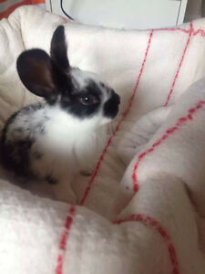 Bunny needs new home