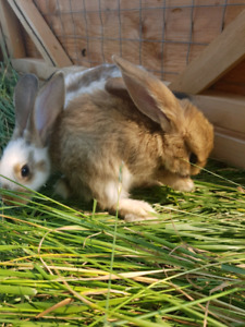 Snuggle bunny looking for loving home