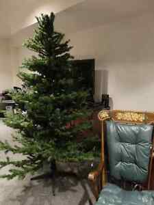BARCANA 7' Christmas Tree Made in Canada Now $49 offers