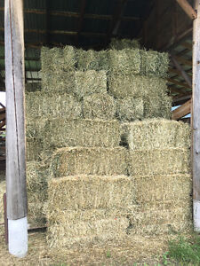 first cut grass alfalfa hay for sale