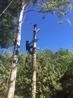 Tree service quick acting