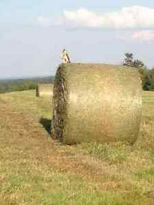 Cow hay $90 per bale delivered price