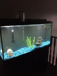 Fish tank 60 gallon with stand