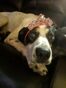 Paws for Love dog rescue has a 2 year female mixed breed toadopt