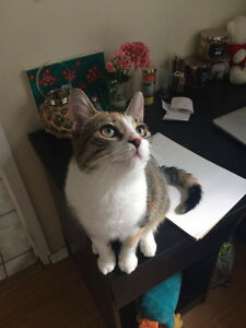 Lost Cat! Kitchener / Waterloo Kitchener Area image 1