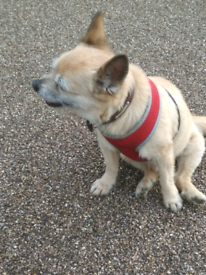 Lost Dog, Last seen on Hackney Marshes on 10th October 2020,
