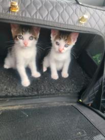 Gorgeous kittens ready to go now