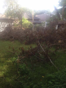 Tons of clean and free firewood for pickup London Ontario image 5